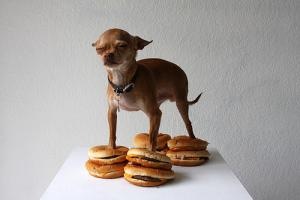Dog on cheeseburgers