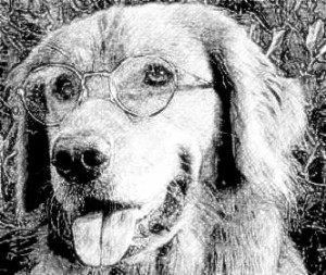 a black and white dog with glasses